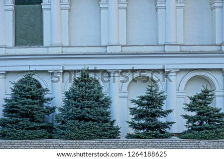 a row of green coniferous trees near the gray wall of a concrete building #1264188625