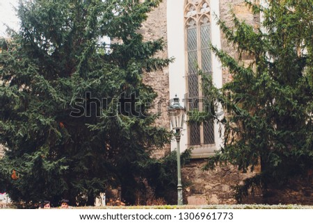 a row of green coniferous trees near the gray wall of a concrete building. #1306961773