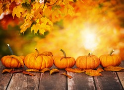 A row of mini pumpkins and autumn leaves on rustic wooden table. Beautiful autumn maple tree leaves background with golden bokeh, copy space.