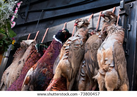 A row of pheasant carcasses hanging on a large wooden door outside the restaurant of a country pub in rural England.
