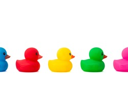 A row of rubber ducks on a white background. Bright colored rubber ducks in a line. Rubber ducks in a row isolated on a white background.