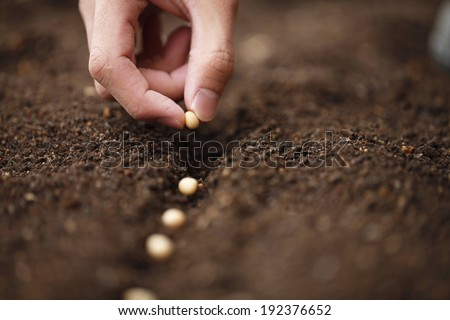 A row of seeds being planted in the soil.