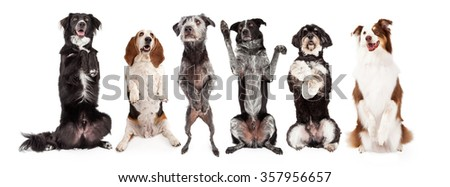 A row of six dogs together - All are sitting up and in a begging position with happy expressions. Image sized to fit a popular social media timeline cover photo placeholder.