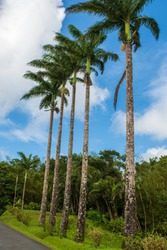 A row of slender tall palm trees along the road against the blue sky wasps clouds.