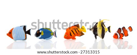 a row of tropical fishes isolated over white #27313315