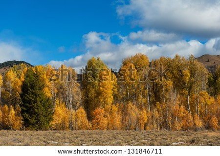 A row of very colorful trees in Idaho near Sun Valley in the Fall