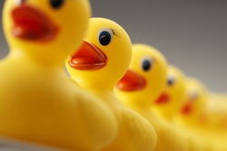 A row of yellow rubber ducks all facing in the same direction.  The focus is on the front rubber duck. The image is photographed from a low camera angle.