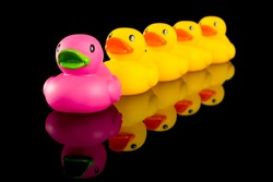 a row of yellow rubber ducks, children's toys lined up in a row being led by the pink duck.  Concept of standing out from a crowd or individuality