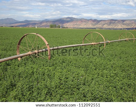 A rural alfalfa field with a wheeled irrigation line.