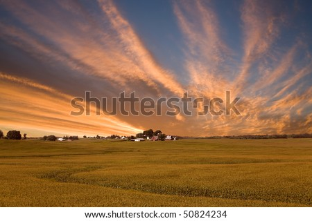 A rural American cornfield in Iowa - stock photo
