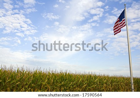 A rural American cornfield with an American flag flying overhead.