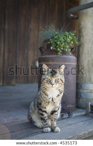 A rural cat sits on a porch with a milk pail