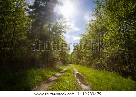 A rural country road bisects a lush green forest. Grass runs down the center of the two-track, flanked by tire-worn tracts of dirt and a puddle. The sun bursts in a blue sky casting solar flares. #1112239679