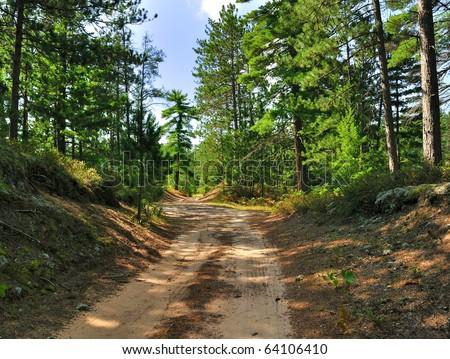 A rural road through a forest