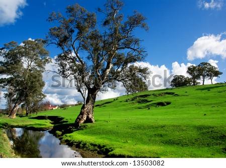 A rural South Australian landscape