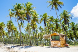 A rustic Brazilian beach shack stands on the palm-lined shore of a remote tropical island in Bahia, Nordeste Brazil