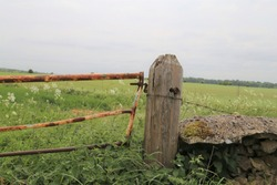 A rusty metal gate attached to a wooden post in a rural farmland setting with stinging nettles and cow parsley.