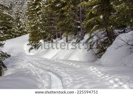 A rut in the snow - created by several people on snowshoes - and a single set of fresh snowshoe tracks wind down a gentle slope in a coniferous forest.