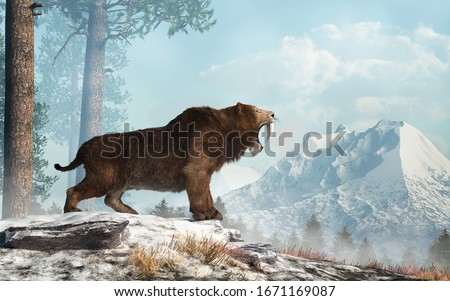 A saber tooth cat stands on a snowy hill and roars into the valley below.  Smilodon populator, the largest cat ever, lived during the Pleistocene era in South America. 3D Rendering