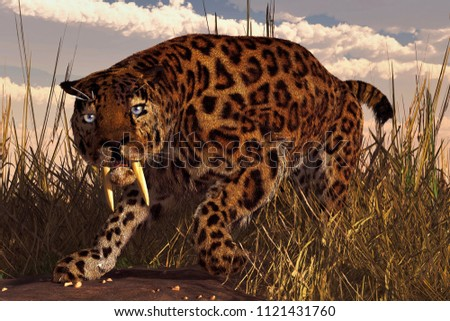 A saber-toothed cat, a smilodon, stalks through tall grass beneath a cloudy sky.  This prehistoric looks right at you with a menacing glare. 3D Rendering
