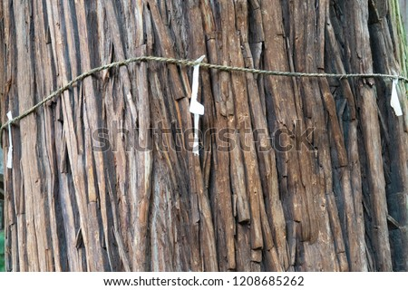 A sacred rice straw festoon and zigzag - shaped paper streamer which used for separating a holy place from other unclean places are to the cedar trees have been crimped in a Shrine in JAPAN. It is a t #1208685262