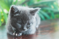 a sad cute kitten on wooden table with tree background
