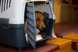 A sad dog in a box for carrying animals in transport. A pet is sitting in a carrier on the train. Rules for the transportation of animals in transport.