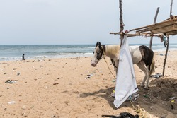 A sad looking lone horse stands on a beach cover in trash in Chennai, India