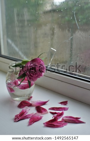 A sad scene, a withered bouquet of flowers on a windowsill, a cracked window, wet from the rain. Loneliness and sadness. #1492565147