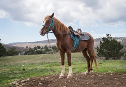 A saddled horse against a mountain valley and a sky with clouds