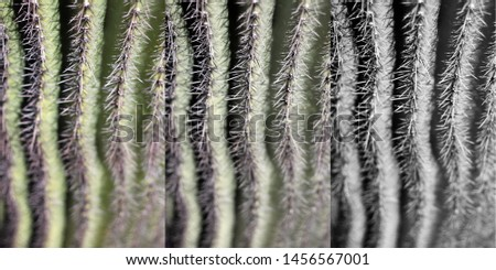 a saguaro cactus with sharp spines vert spines