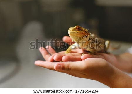 Photo of  a sand lizard sits in the owners hands, a reptile with sharp spikes and brown scales, a dragon rearing at home, an amphibian pet