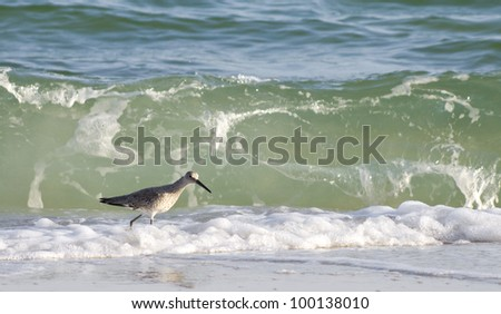 A Sandpiper fishing on the Alabama gulf coast.
