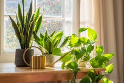 A sansevieria trifasciata snake plant in the window of a modern home or apartment interior.