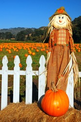 A scarecrow and pumpkin stand at the entrance of a pumpkin patch in Half Moon Bay, California