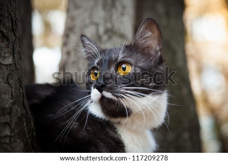 A scared cat on a tree  outdoor