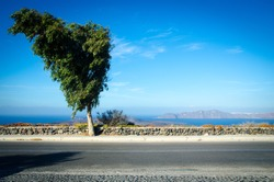 A scene of a tree on the street side with the oceon view and blue sky