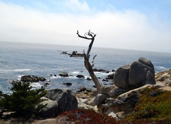 A scenic view of a dead tree on a rocky shore