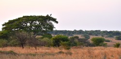 A scenic view of the African bushveld. Taken while on safari in Africa.