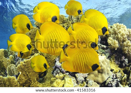 A school of colorful reef fishes