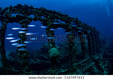 A school of fish swimming by the remaining ribs of the Rhone wreck