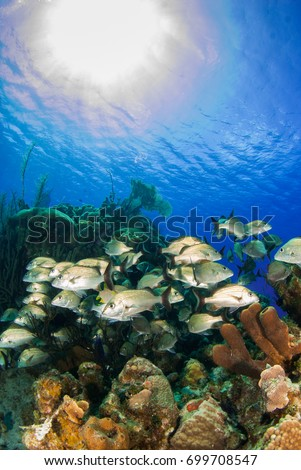 A school of reef fish enjoy the perfect temperature of the tropical Caribbean waters in Grand Cayman. Much life can be found in the complex ecosystem underwater. healthy coral makes a good home #699708547