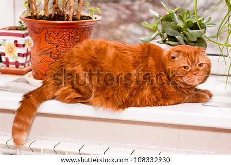 A scottish fold cat lying on a windowsill in front of houseplants
