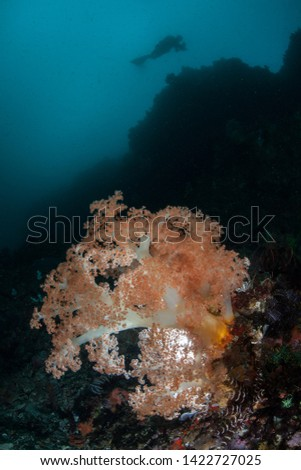 A scuba diver explores a deep, vibrant coral reef in Komodo National Park, Indonesia. This region harbors extraordinary marine biodiversity and is a popular destination for divers and snorkelers. #1422727025