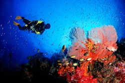 A scuba diver with amazing sea fan in the magnificent underwater world.