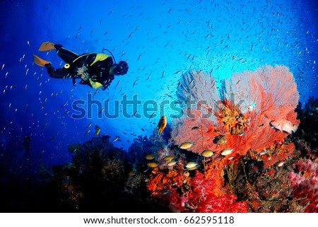 A scuba diver with amazing sea fan in the magnificent underwater world. #662595118