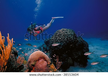A scuba diving girl in a bikini poses above the coral reef in the warm waters at St. Croix Island in US Virgin Islands.
