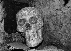A sculpture resembling a real human skull