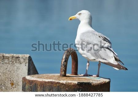 A sea gull on a concrete block near a wall near the Ems-Jade-Kanal from Wilhelmshaven  Zdjęcia stock ©