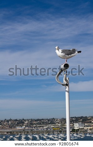 A sea gull perched atop a surveillance camera helps to keep watch